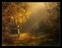 autumn forest by YoachimHUN