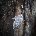 Sassafras albidum Silver Mitten Leaf by QuintessentialArts