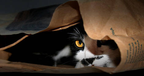 ...cat in the bag... by eguard