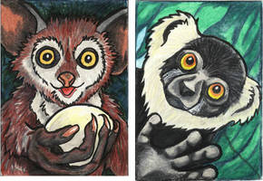 ATC - Primatopia by lemurkat
