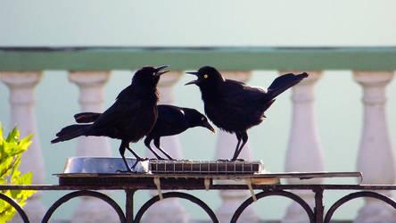 Funy Carib Grackle black birds by SkyerFox
