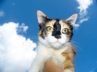 Suny Kitty by SkyerFox