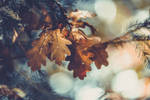 Mon Automne - ma saison mentale by Yggdr4zill