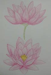 Water Lily watercolor painting by steffy0075