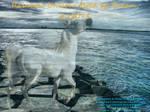 Unicorn Manip by Dream-Vizsla