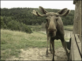 moose valley 3. by Moosiatko