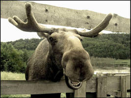 moose valley 5. by Moosiatko