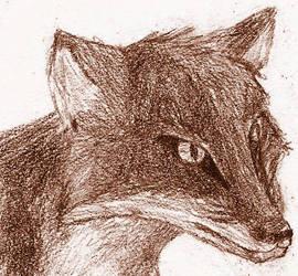 SdJ 20080111: Fox by archaemic
