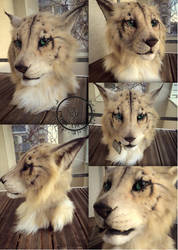 Khajiit mask for sale by InerriCreatures