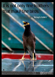 Bird by Orlandosolutions