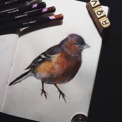 Sketchbook Chaffinch by ClaudiaCooper