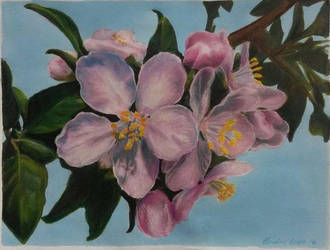 Crabapple Blossoms by ClaudiaCooper