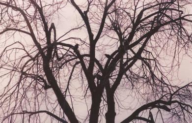 Crows in a Tree by paulkarpinski