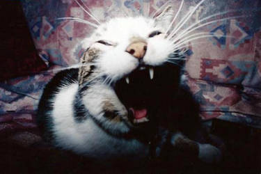 The Big Yawn by paulkarpinski