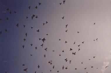 Pigeons in Provence by paulkarpinski