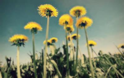Dandelion Dust #Blur by clauds27