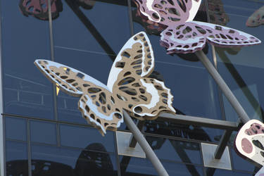 butterflies by angela808