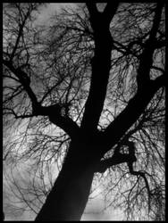 Dark Tree by CrimsonCemetery by BlackMetal-Club