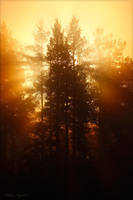 Morning fog by Starfall00