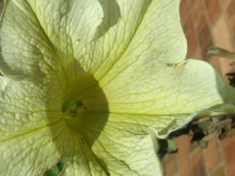 Yellow and white flower by courtneycookie1
