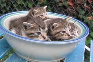 Kitten Bowl by Chance87