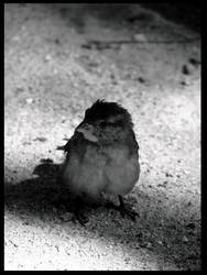 morning bird by MiAsbeAch