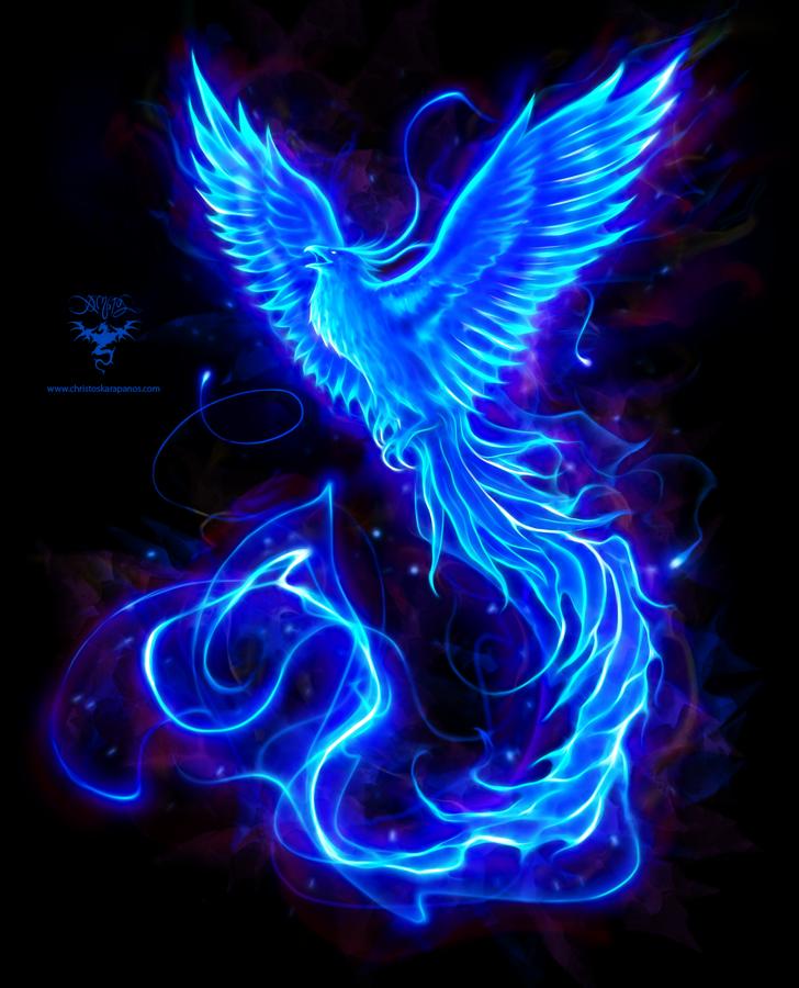 Blue Phoenix logo by amorphisss