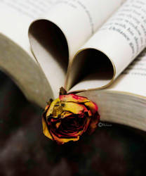 reading is my love by Sparia