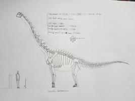 Vouivria skeletal by paleosir