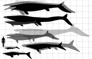 Maastricht formation: mosasaurs by paleosir
