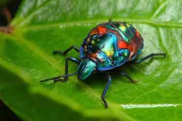 metallic shield bug II by troypiggo