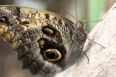 Wild Eyes by LydiaRhianne