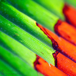 Abstracts of Nature II by LydiaRhianne