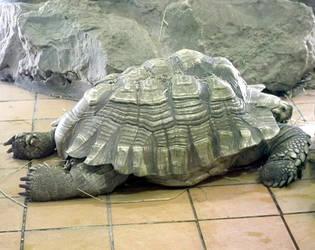 Turtle Stock by DemoncherryStock