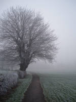 fog stock 2 by DemoncherryStock