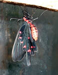 butterfly stock1 by DemoncherryStock