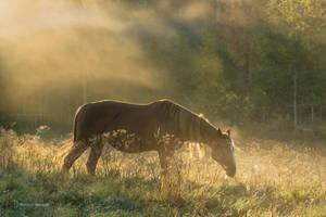 Foggy morning in the paddock by roisabborrar