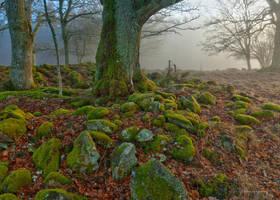 Mossy stones by roisabborrar