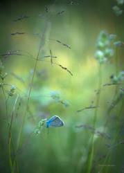 Evening in the meadow by roisabborrar