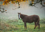 Autumn in the paddock by roisabborrar
