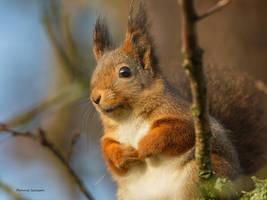 The cute Squirrel by roisabborrar