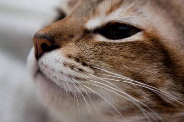 Cat sniff by jrjs