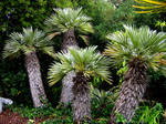 Mini palm trees by EasyCom