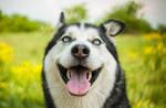 My Sweet Dog - Her name is Balta by PatiMakowska
