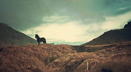 loneliness or freedom - Iceland by PatiMakowska