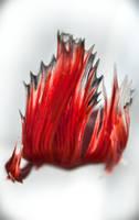 Betta fire by copperarabian