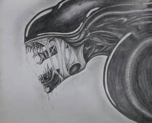 Xenomorph drawing  by DR3WZILLA