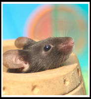 Mouse Barrel by Second-Harvest