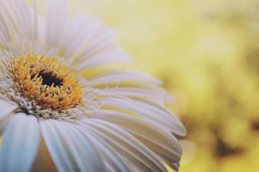 Flower macro by Tweety2012