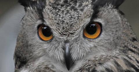 I'm watching you! by crazylama